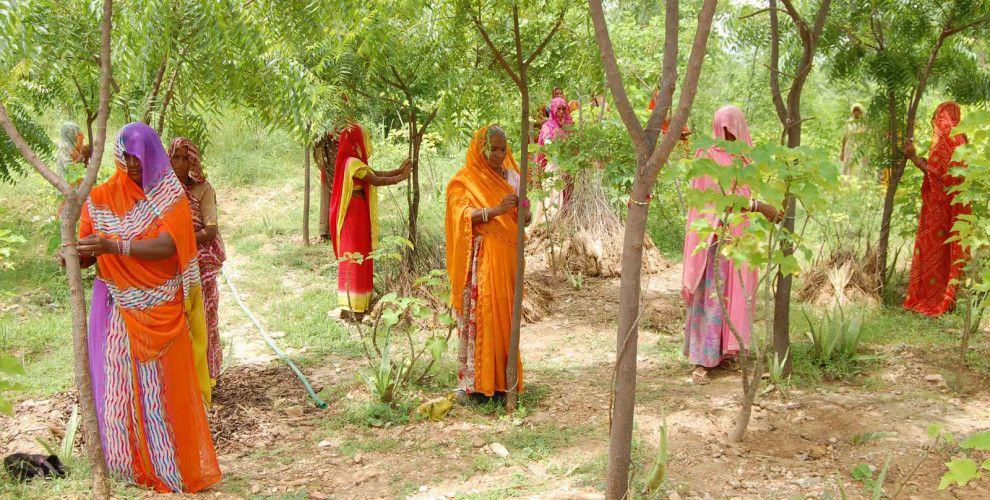 En Piplantri, aldea de Rajasthan (India), creouse unha  nova tradición como fórmula contra a discriminación de xénero: co nacemento de cada nena a comunidade celébrao reuníndose para plantar 111 árbores no terreo comunal.