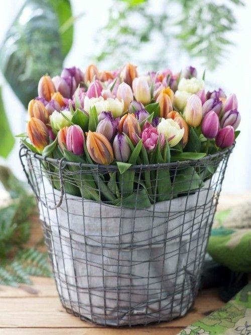 Arrangieren Sie Die Tulpen In Einem Drahtkorb Und Setzen Sie Die Deko In Szene Tulpen Blumen Fruhling Blumen Fruhlingsblumen