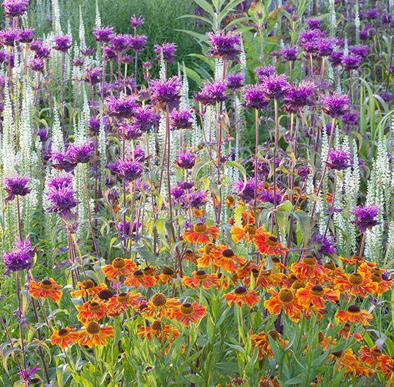 Plantes vivaces pour le jardin vivaces couvre sol for Les plantes vivaces