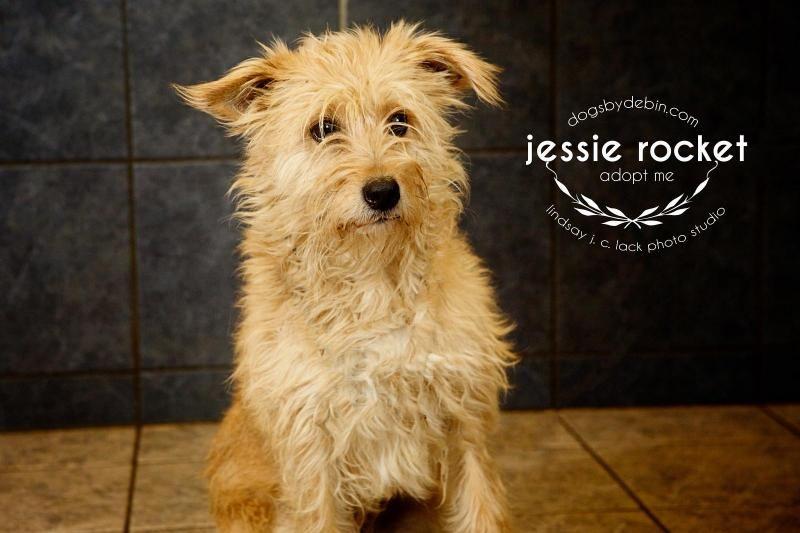 Puppies for adoption in kansas city missouri