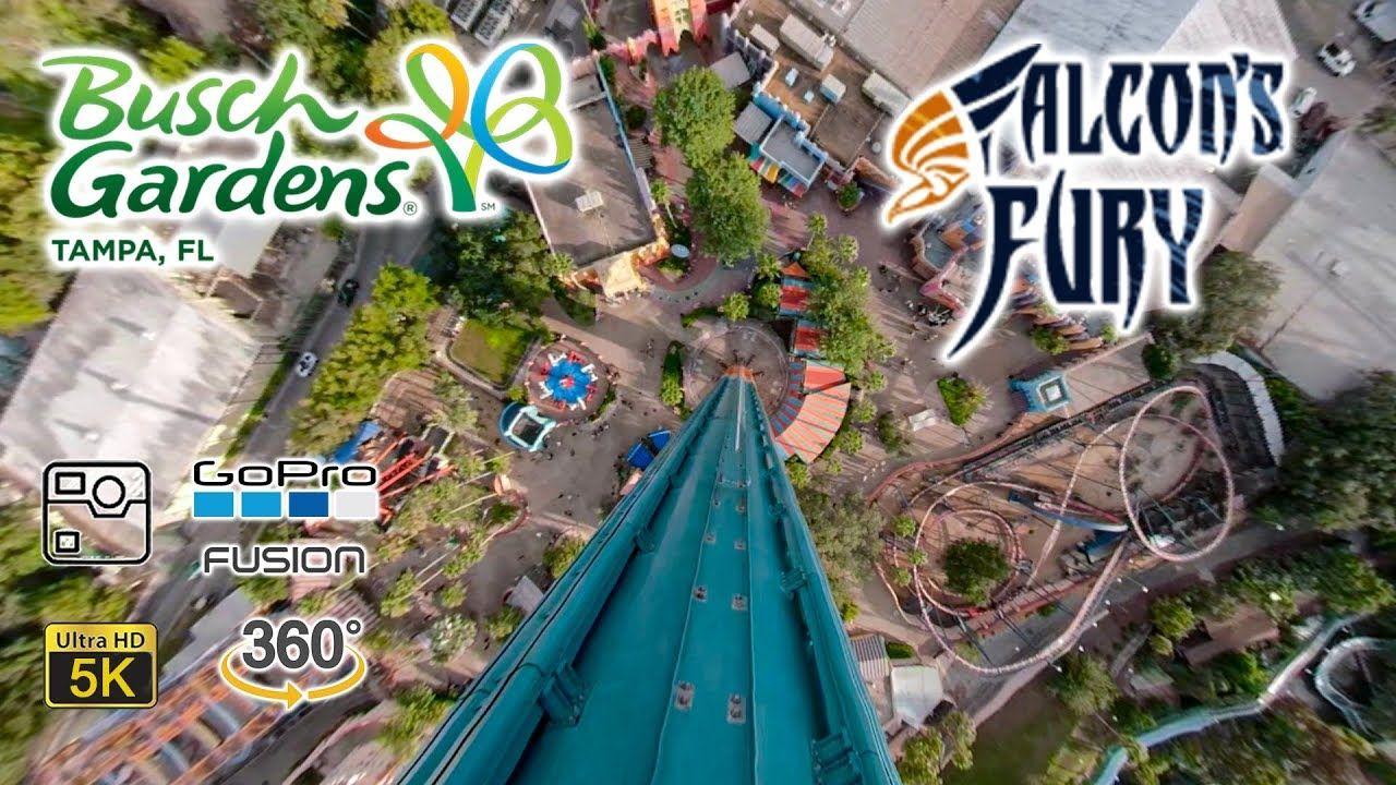 Falcons Fury Pics Bing Images Florida Theme Parks Busch Gardens Tampa Theme Park