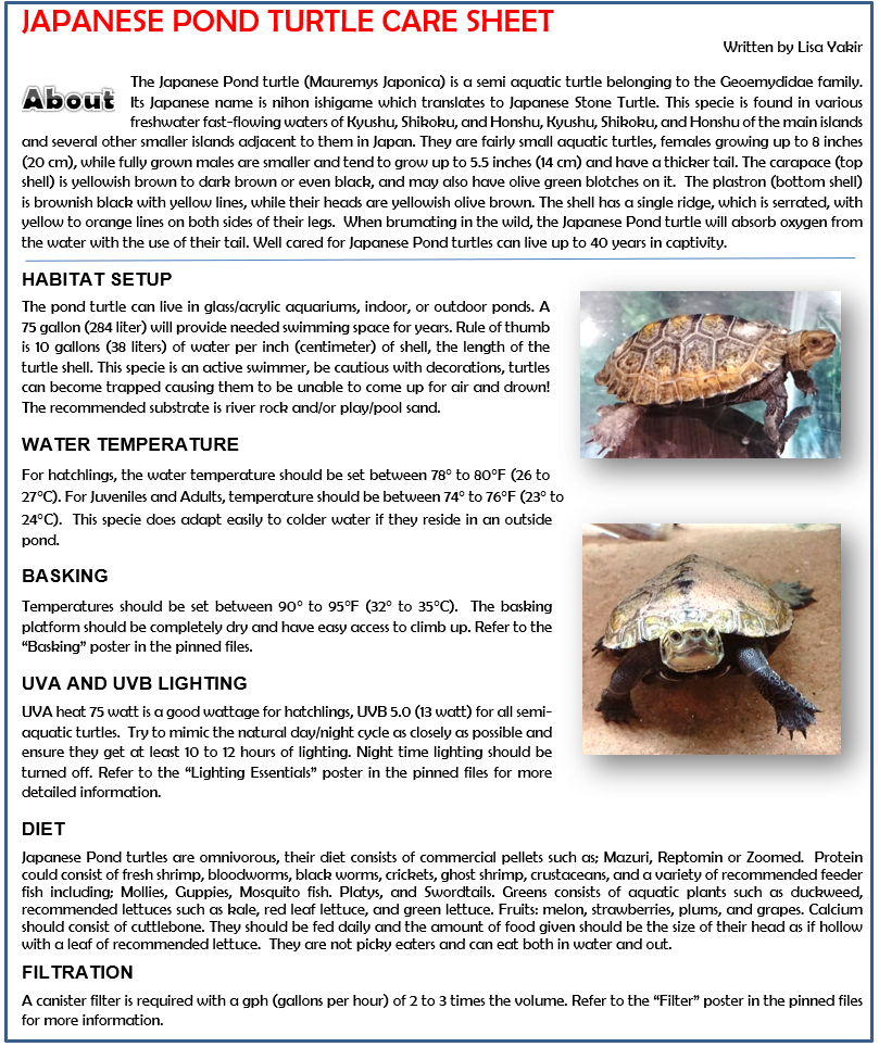 Japanese Pond Turtle Care Sheet Turtle Care Turtle Pond Turtle