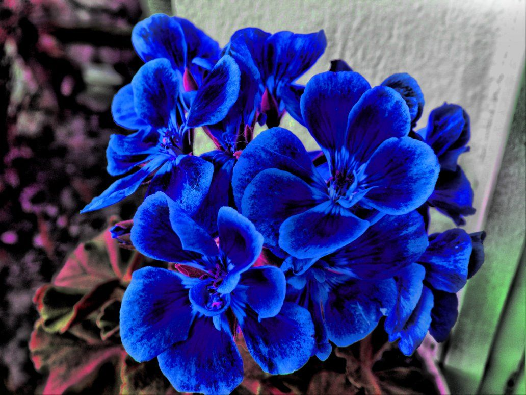 Blue Flowers Hdr By Dcalq3dneopl