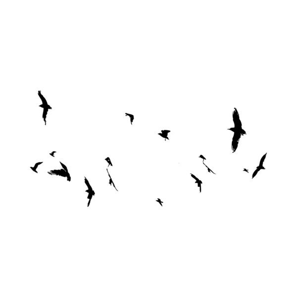 Dus Intothedarknessfree Birds Png Liked On Polyvore Photoshop Textures Photoshop Elements Photoshop Design