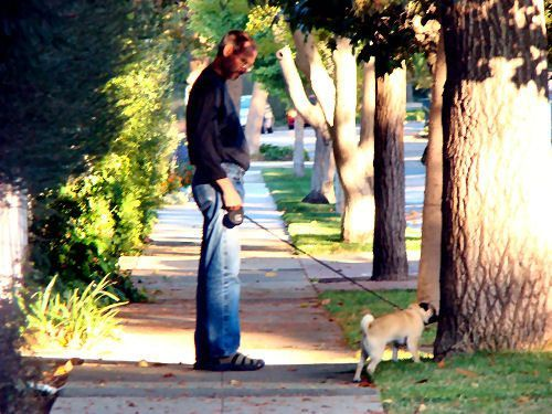 Steve Jobs Taking The Dog For A Walk Dogs With Jobs Steve Jobs