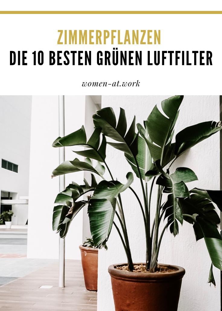 Zimmerpflanzen Die 10 Besten Grunen Luftfilter In 2020 Pflanzen Zimmerpflanzen Und Luftfilter
