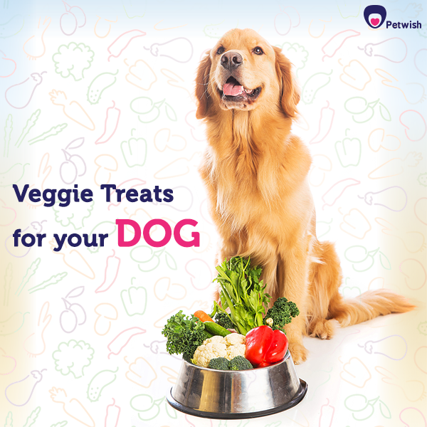 Buy Pet Supplies Online At Low Prices In India At Petwish Find Premium Accessories High Quality Food Health Car Online Pet Supplies Pet Accessories Buy Pets