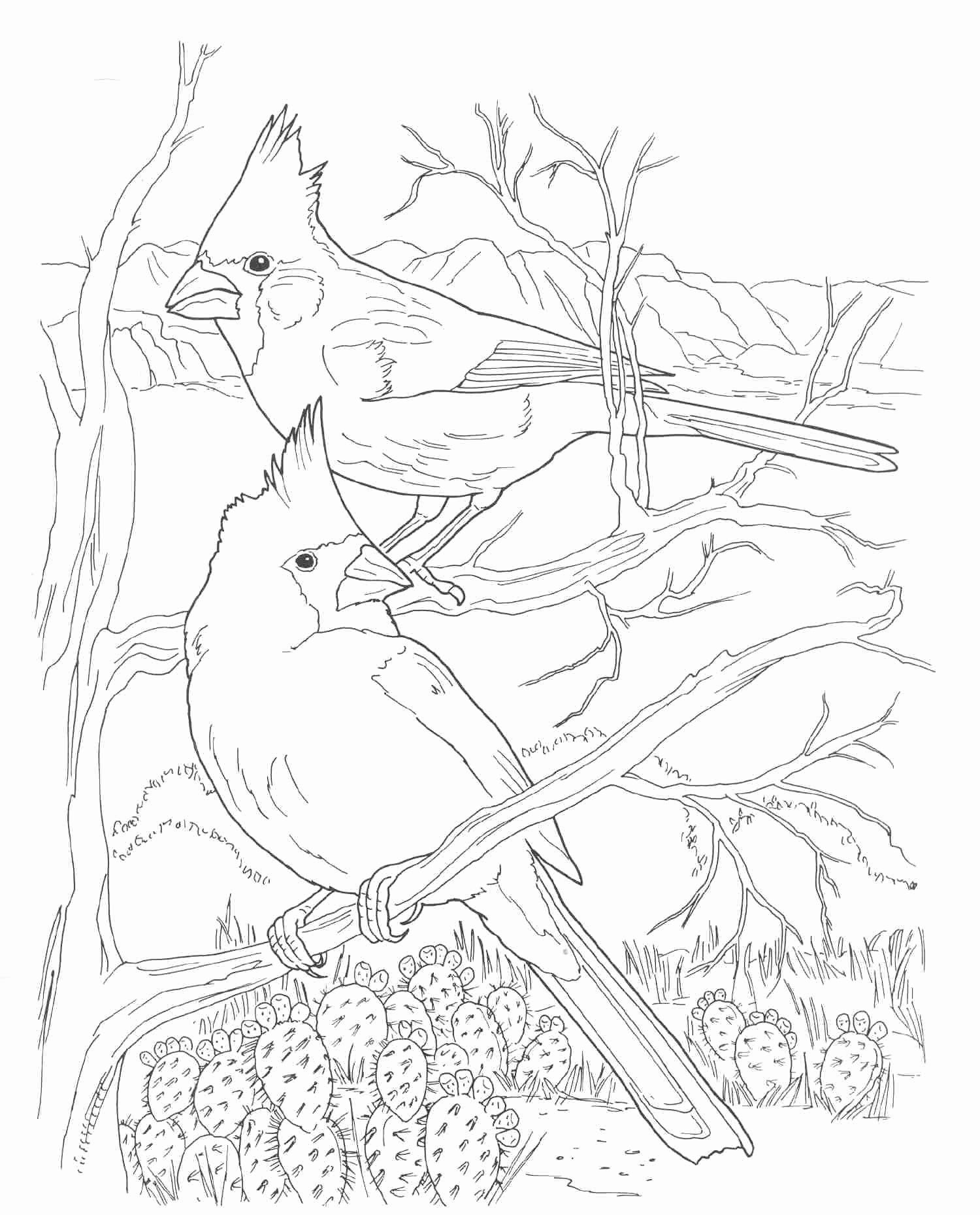 Arizona Cardinals Coloring Page Fresh Cardinals Sketches Coloring Pages Elsa Coloring Pages Monster Coloring Pages