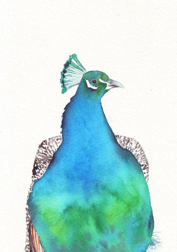 Peacock watercolor painting P049  print of by Splodgepodge on Etsy, $15.00