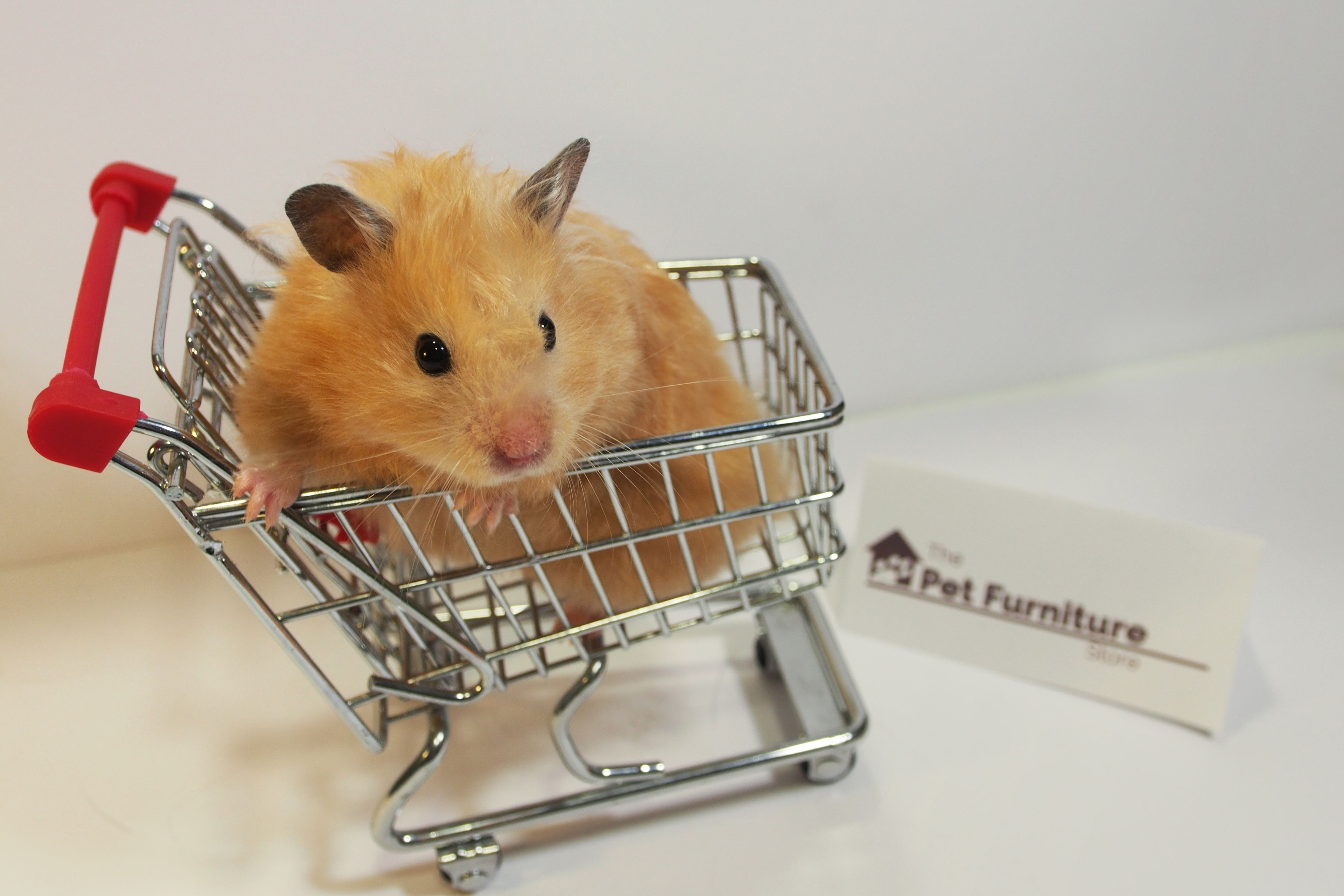 Are You And Your Hamster In The Shopping Mood Visit Thepetfurniturestore Com For All His Furniture Needs Hamsters As Pets Pet Furniture Pets