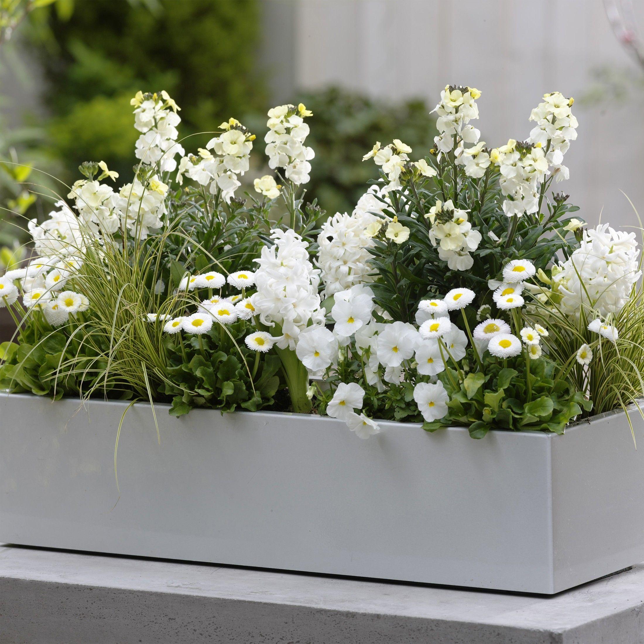 Collection Printemps blanc ivoire Bulbes et fleurs