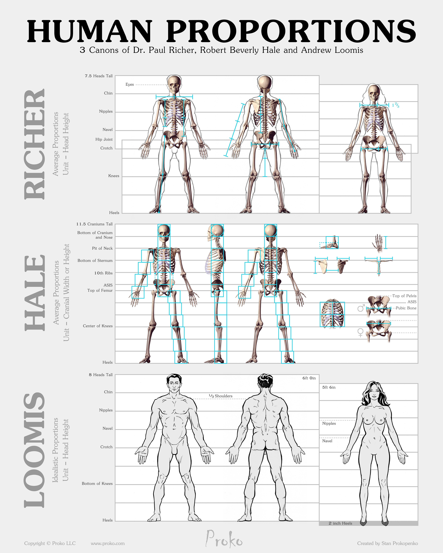 Pin by Angel Tenshie on Useful stuff | Pinterest | Anatomy, Anatomy ...