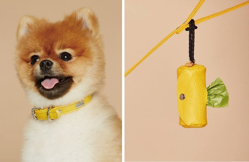 Colorful Leather Collars Harnesses And Leads From Hello Jello Dog Milk Dog Themed Furry Friend