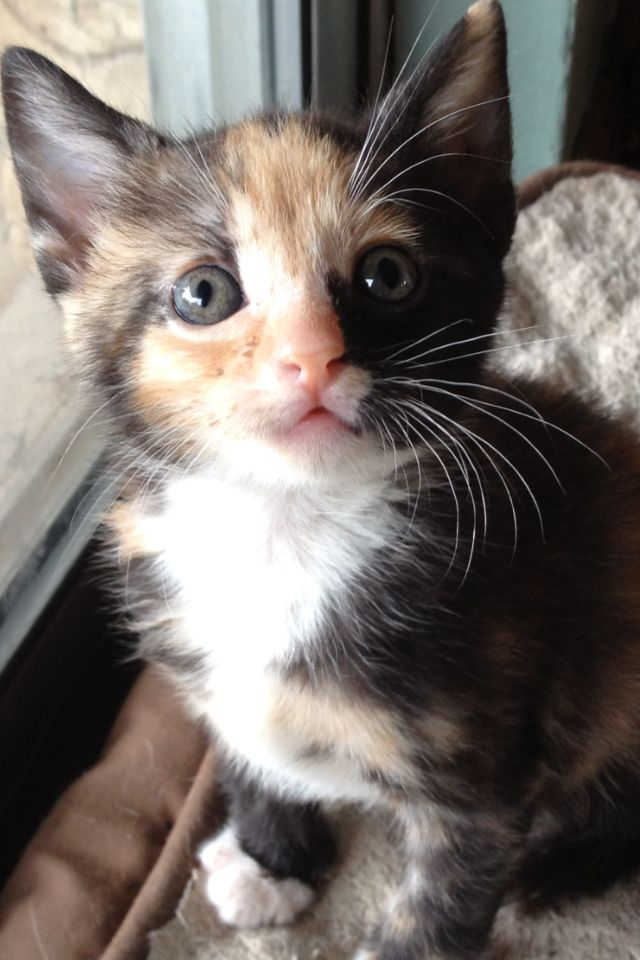 Little Miss Orphan 4 Weeks Old Today Cute Cats Kitten Pictures Cute Animals