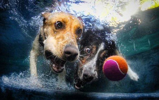 Dog Faces Under Water Lol Underwater Dogs Funny Animals