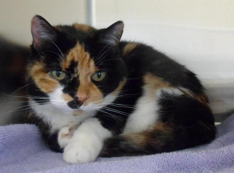 Adopt Asia On Animals Animal Shelter Cats