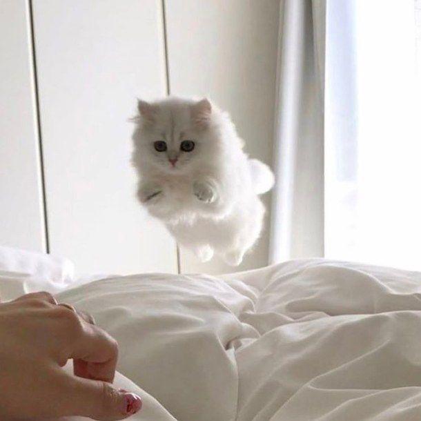 Aquí voy para que te levantes de la cama dormilona y me atiendas.