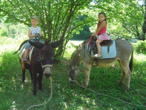 Verleih von Eseln mit Sattel oder Packsattel - Aktivität Urlaub & Reisen in Mialet