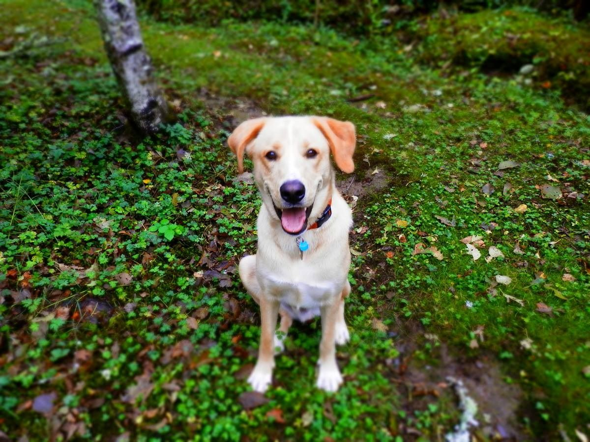Mushroom Toxicity In Dogs What You Need To Know Lyme Disease In Dogs Dogs Veterinary Care