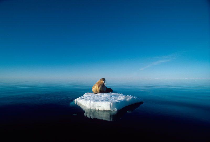 Umweltfotofestival »horizonte zingst« 24. Mai bis 1. Juni 2014 - »Grandiose Naturdokumente«