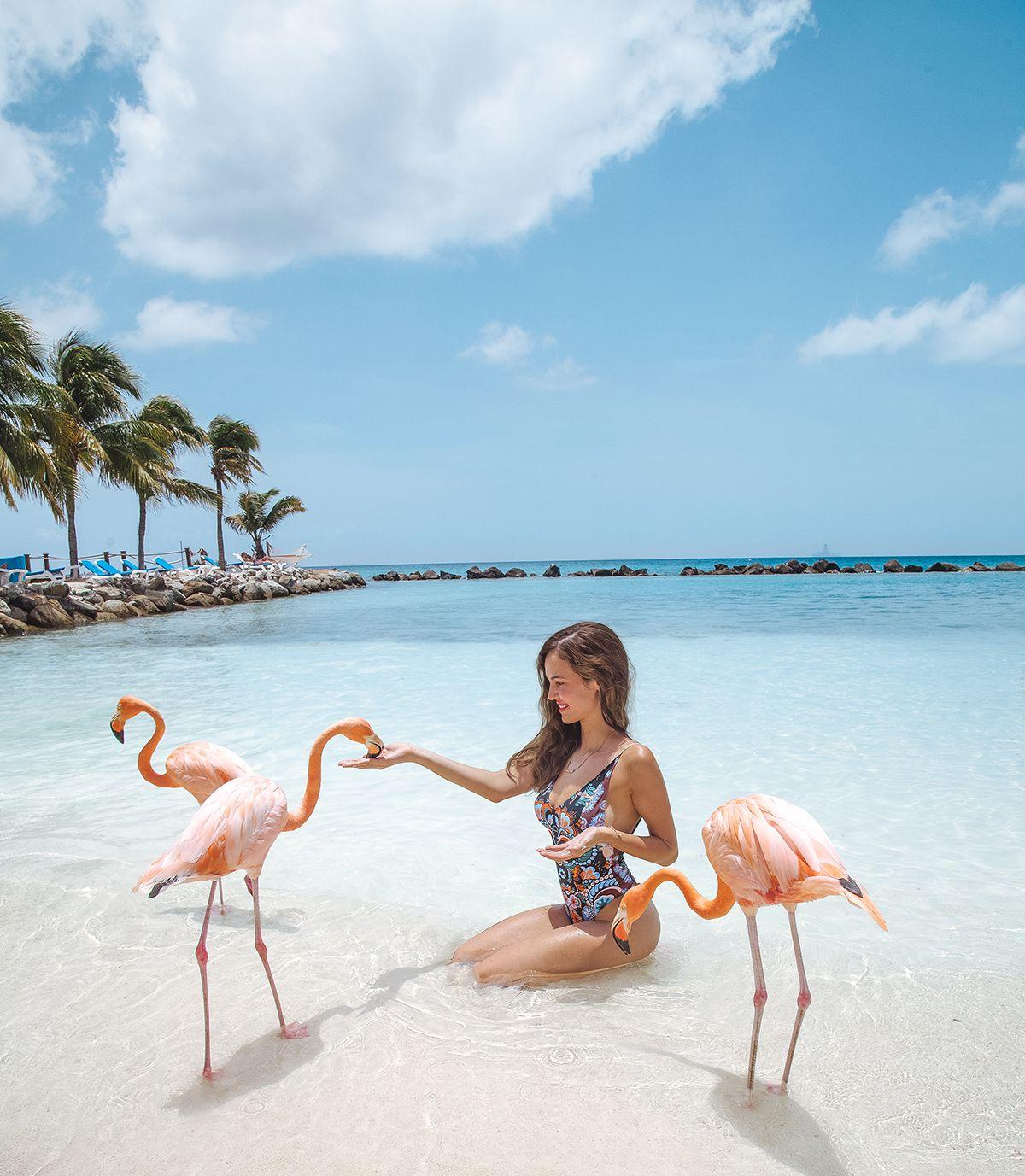 Картинка доминикана с фламинго