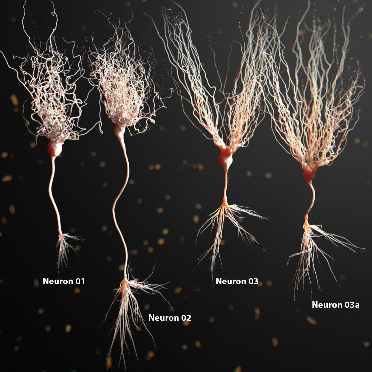 3d Model Of Neuron Anatomy 3d Model Medicine Pinterest