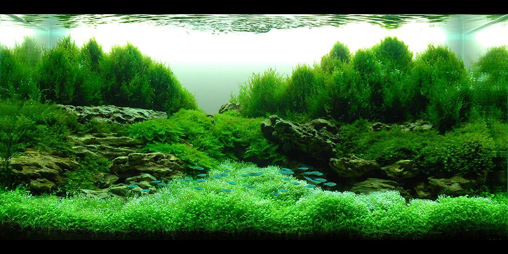 Aqua Forest Aquarium Aquarium Inspiration Pinterest