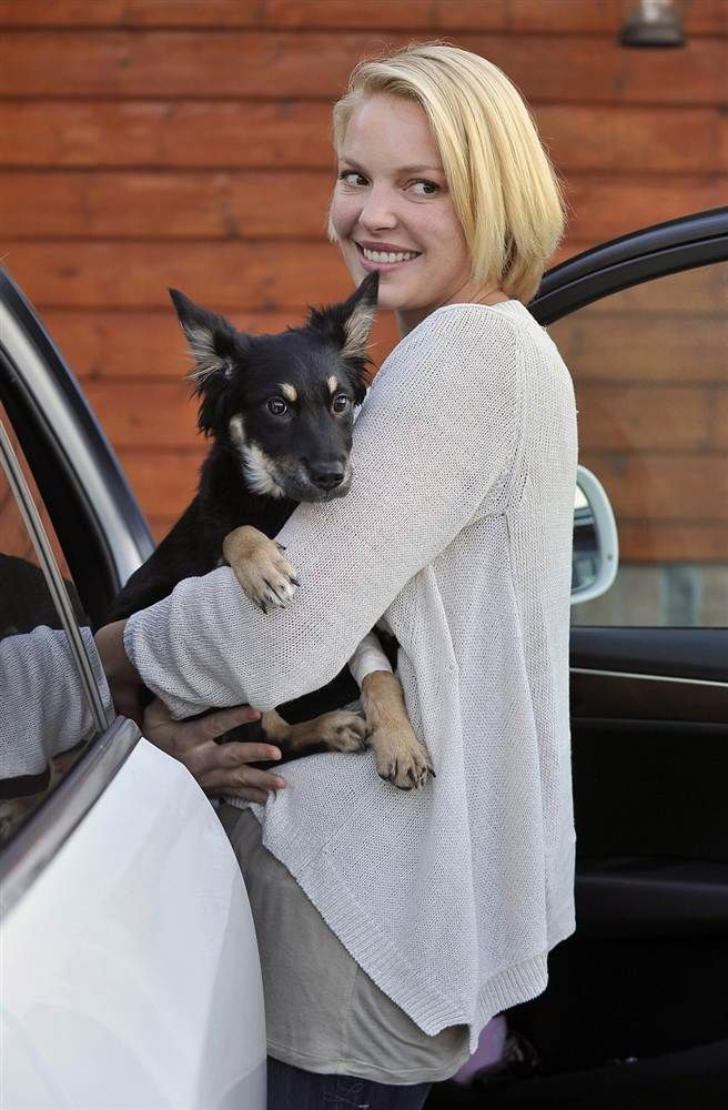 Celeb Pets Animals Are A Star S Best Friend Celebrity Dogs Shepherd Mix Puppies Pets