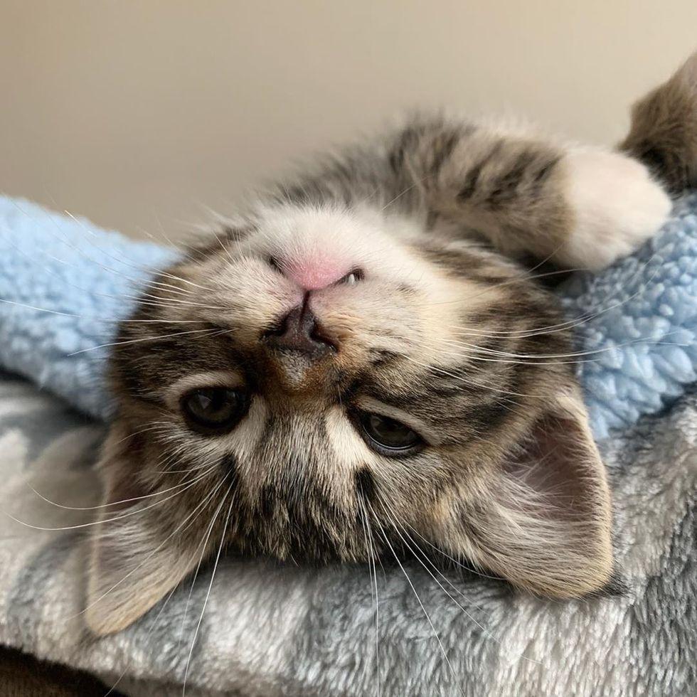 Stray Kitten Found Alone On The Street Finds A Friend To Cuddle Love Meow In 2020 Kitten Tabby Kitten Cuddle Love