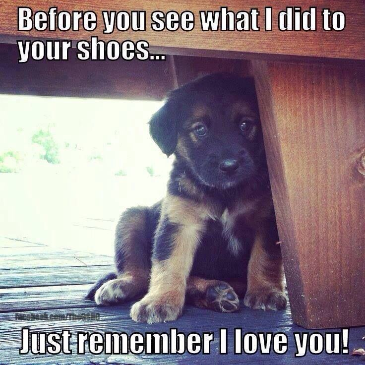 Just Remember I Love You This Is The Look I Got From My Ryder When He Ate My Boots Really Cute Dogs Funny Animals Cute Puppy Pictures