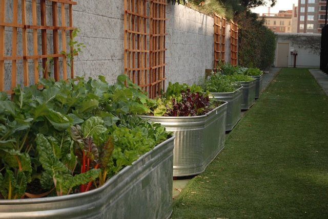 Urban Vegetable Garden Design Raised Beds