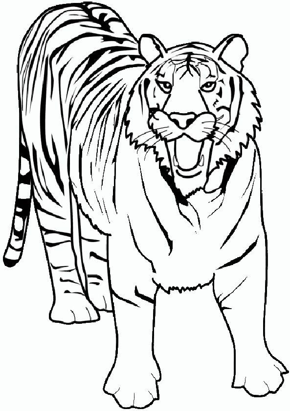 Zeichnung von Tiger 1 | coloring pages | Pinterest
