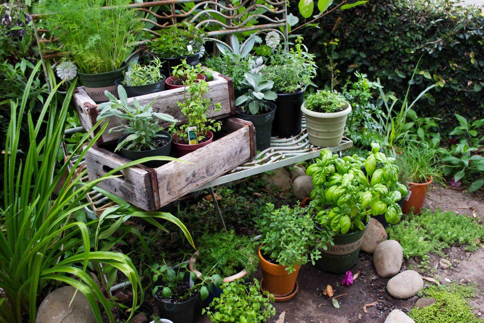 Blindscapes Small Herb Gardens Indoor Herb Garden Herb