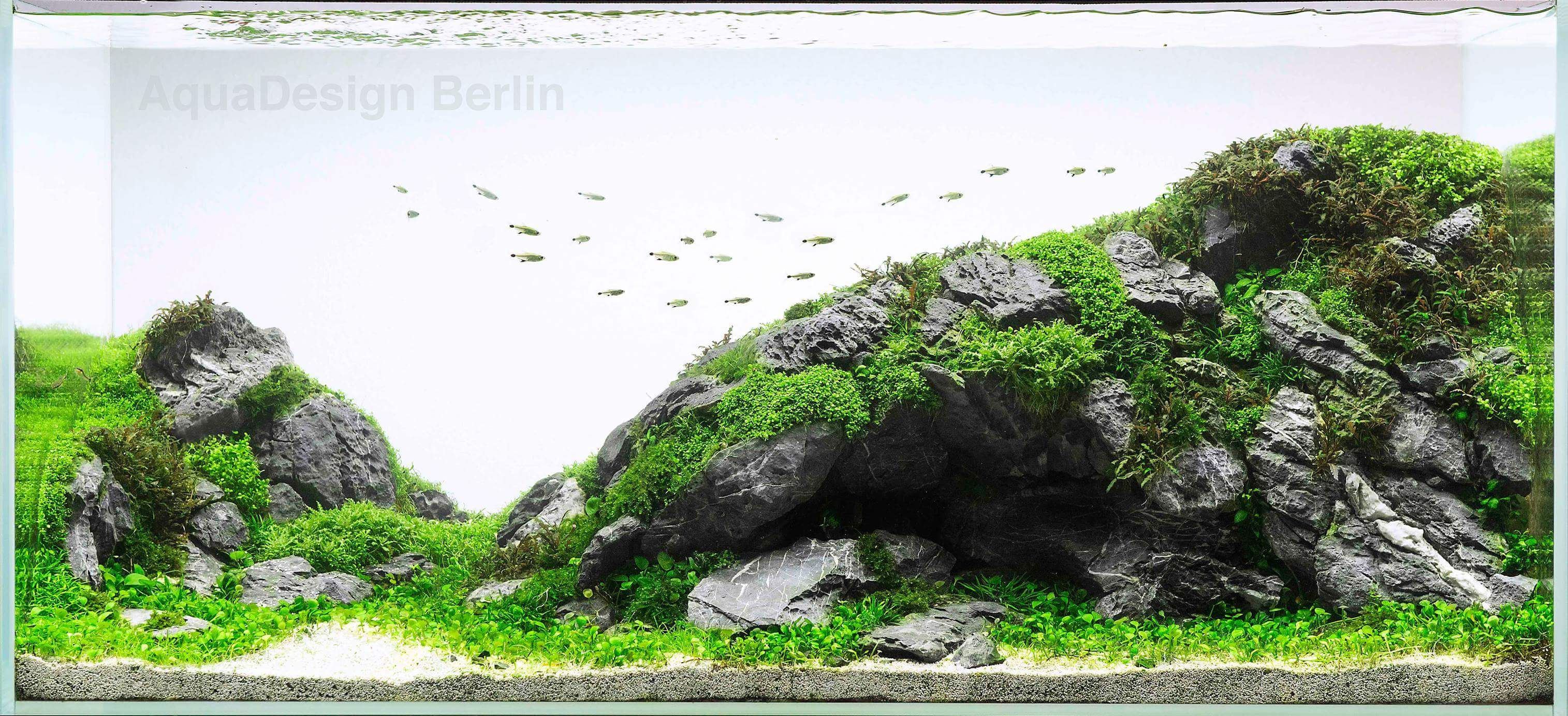 Pin by upwards and onwards on aquascape pinterest aquariums