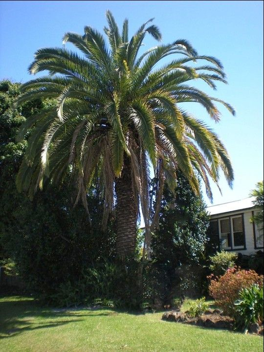 Palm Trees Landscaping
