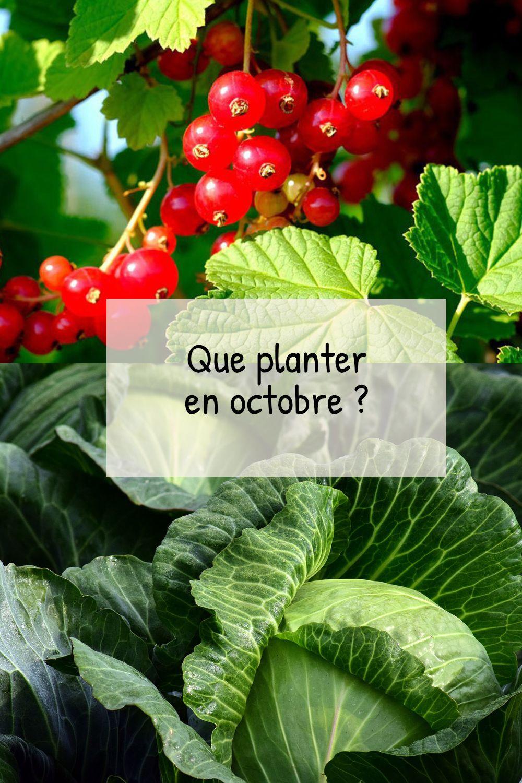 Que planter en octobre au potager ? - Fiches pratiques du jardin   Potager, Que planter en ...