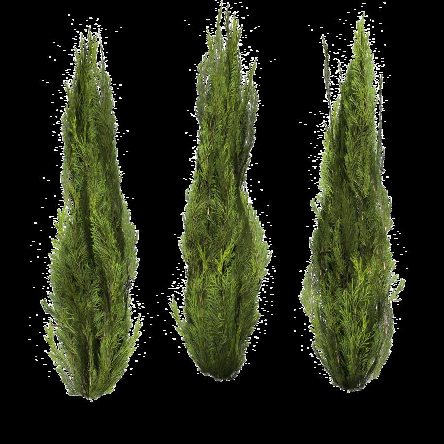 Evergreen-set of 3 by *BrokenWing3dStock on deviantART