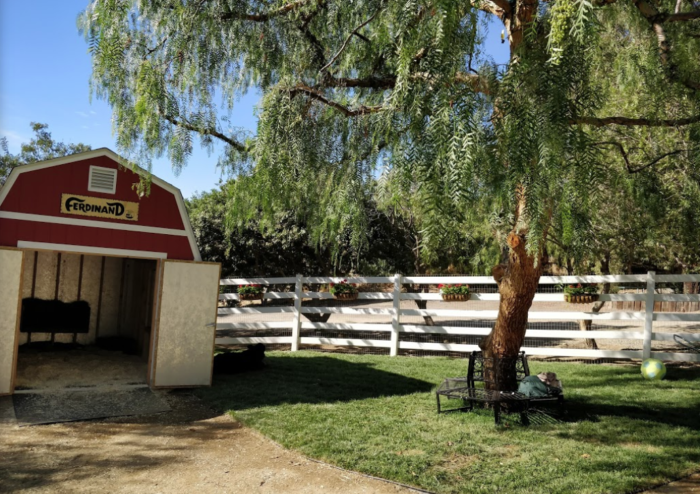 Take This Virtual Tour Of The Gentle Barn In Southern ...