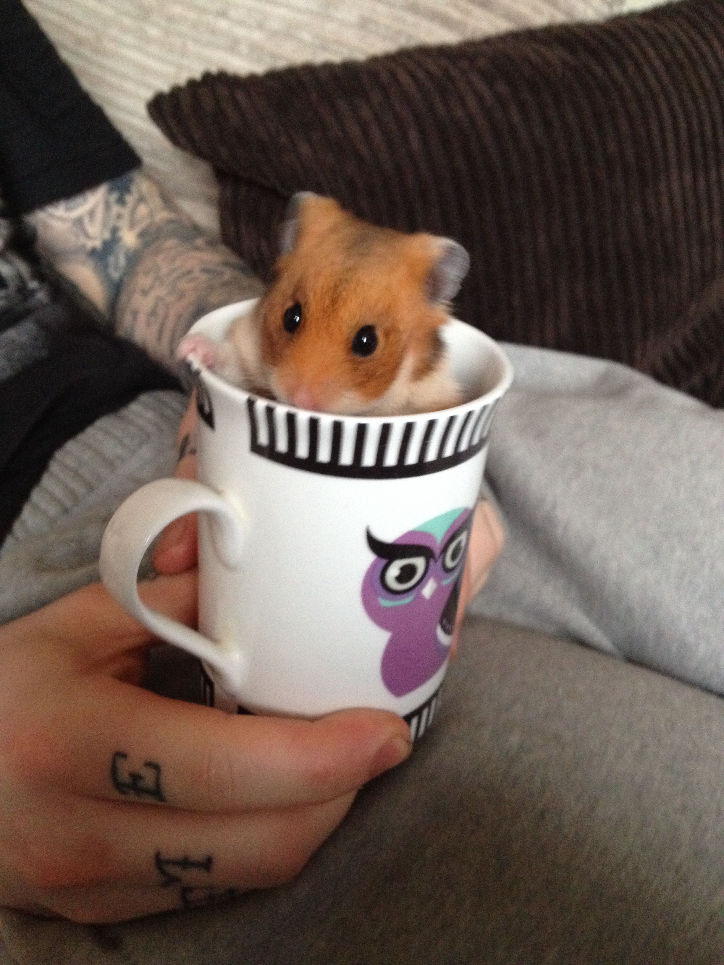 My hamster chuck...in a cup!! Too cute!