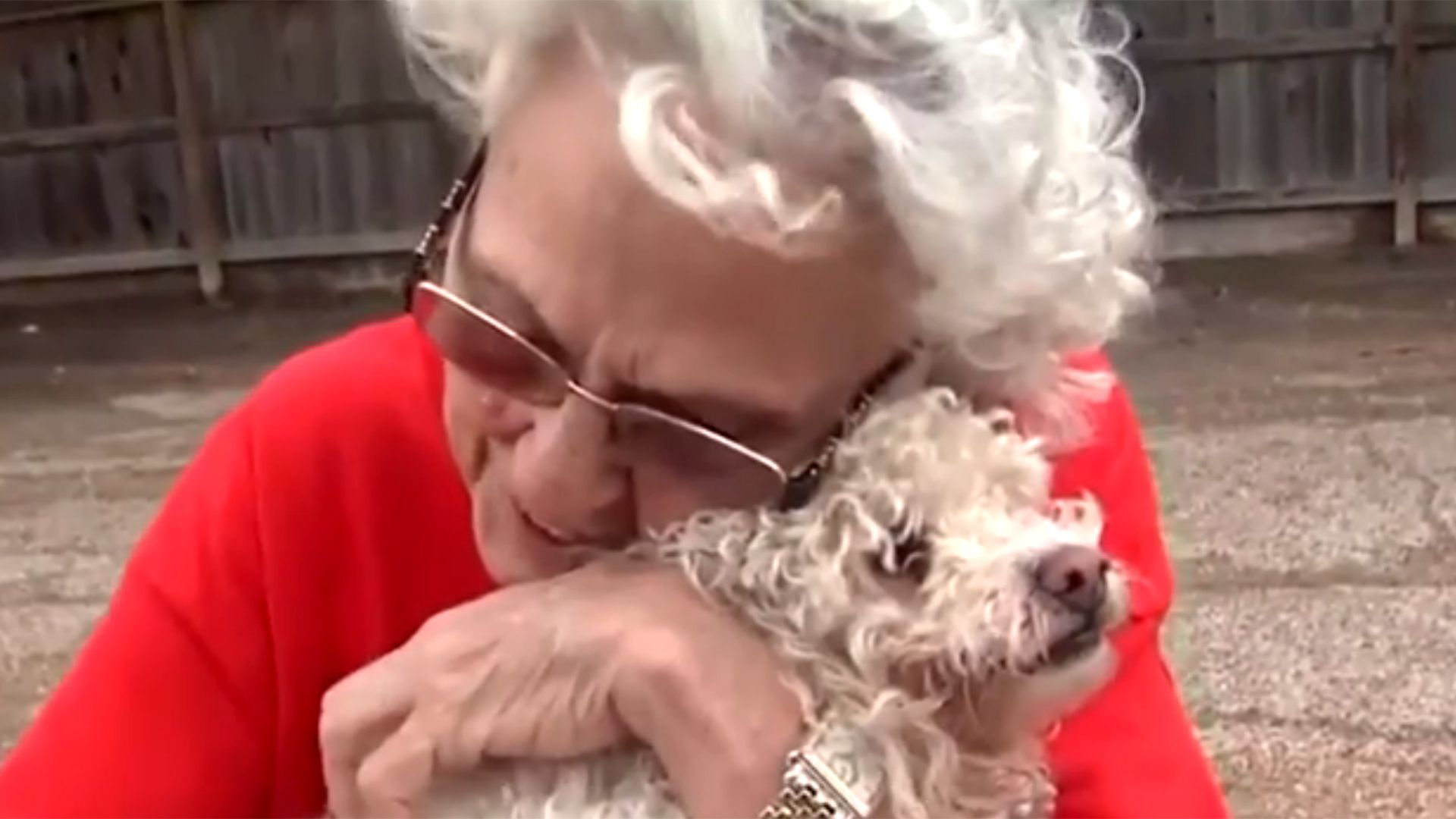 Grandma Reunited With Beloved Poodle Tinkerbell After Texas Flood Texas Flood Poodle American Kennel Club