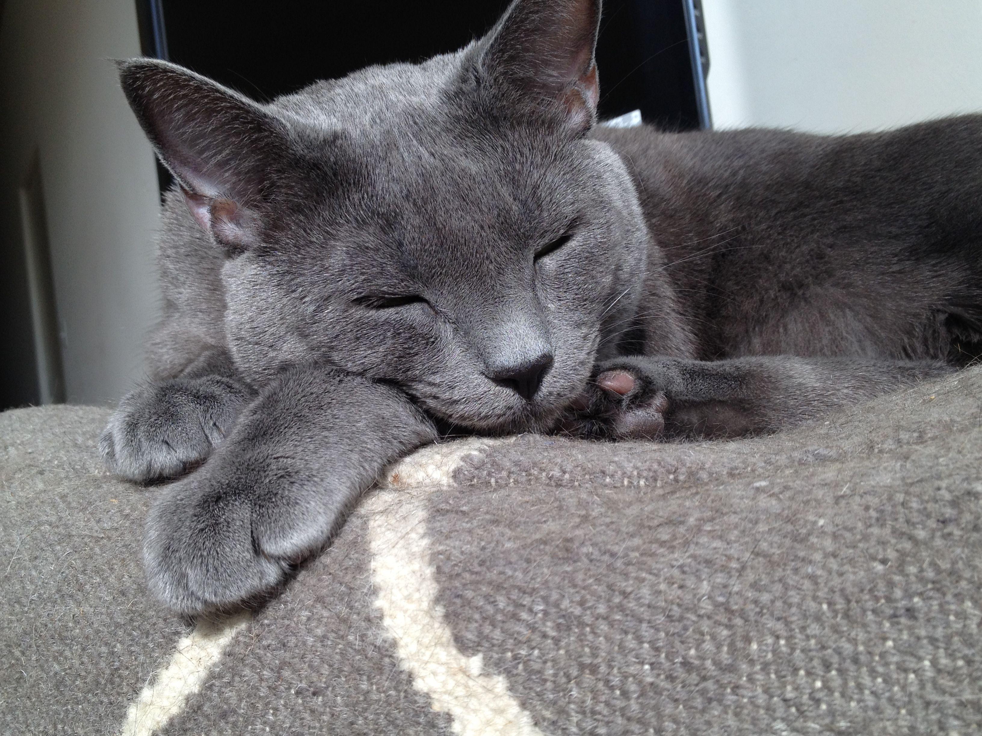 Smudge always sleeps funny