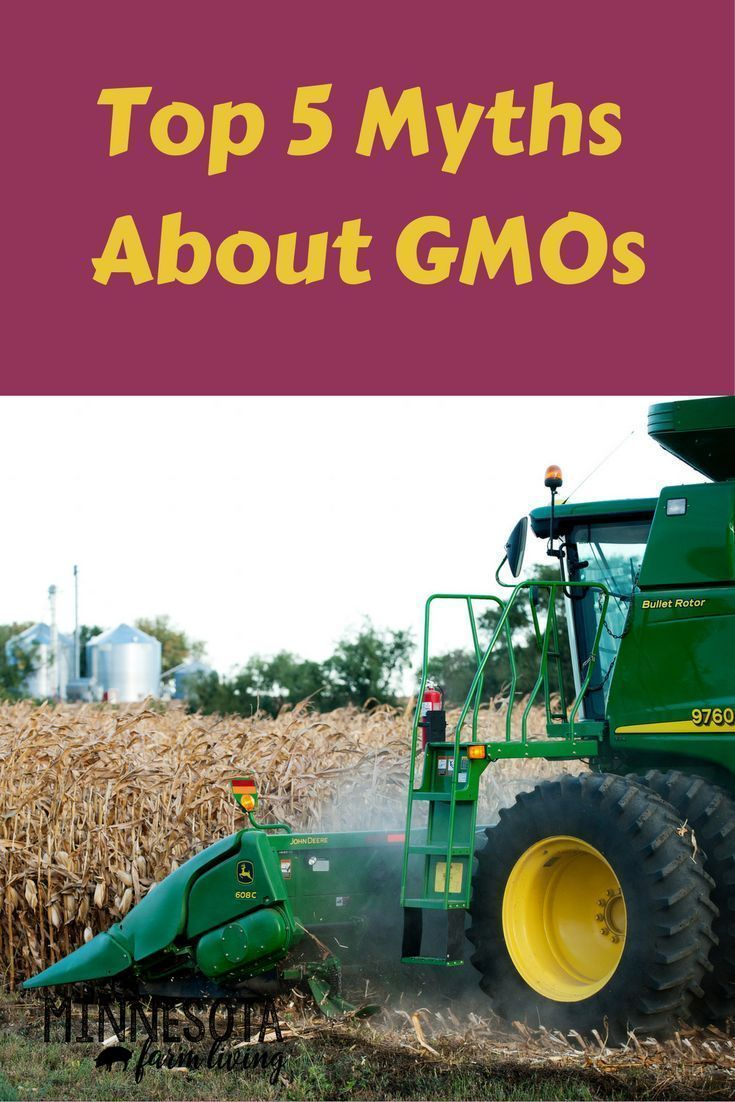 Myths About GMO Foods Debunked Gmo facts, Knowledge