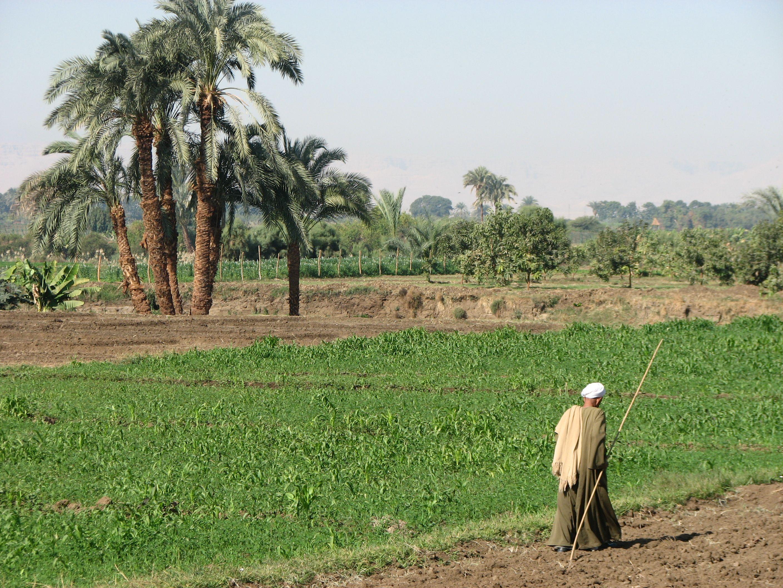 near Louxor ; Egypt