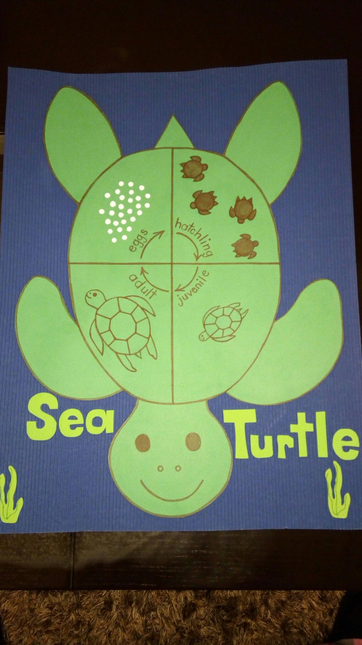 Sea Turtle Life Cycle S