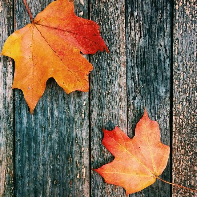 Pin by Steven on Eyecatching Autumn leaves, Autumn