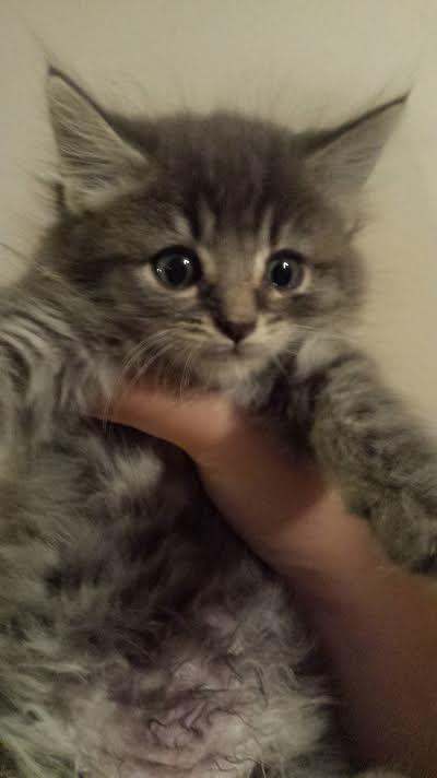 Cute kitten Cute cats, kittens, Pretty cats, Kittens cutest