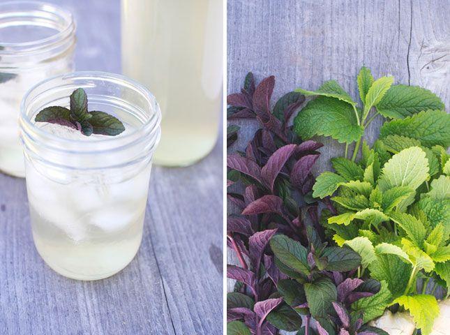 Minty Lemon Balm & Ginger Herbal Tea | 15 Sweet Tea Treats