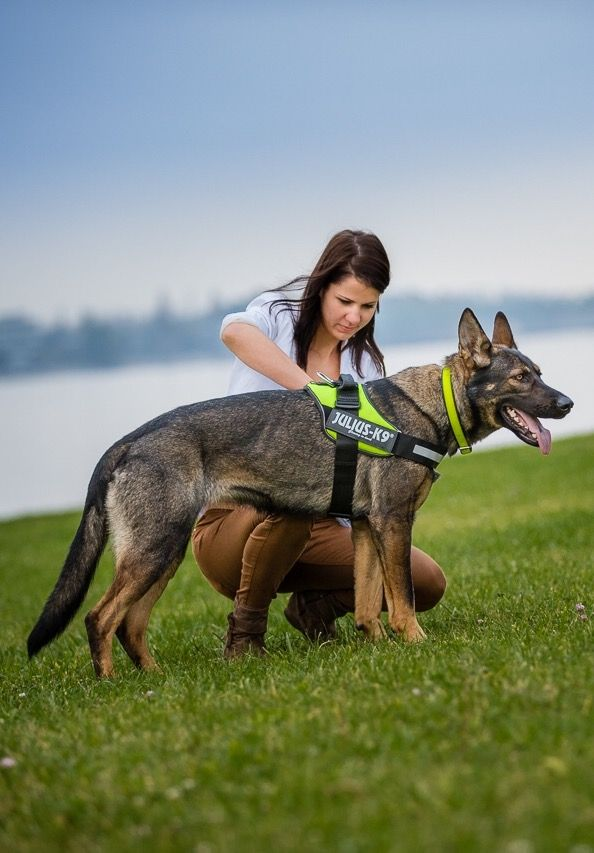 Need a new dog harness with all the bells and whistles? Julius K9 USA