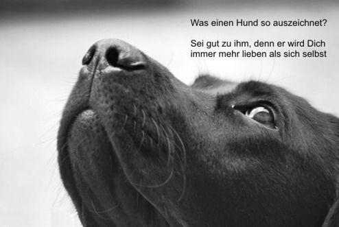 Egal Wie Wenig Geld Und Besitz Du Hast, Einen Hund Zu Haben Macht Dich  Reich. (Louis Sabin) FB.wau.wau.rudeltier | Bilder | Pinterest | Dog, ...