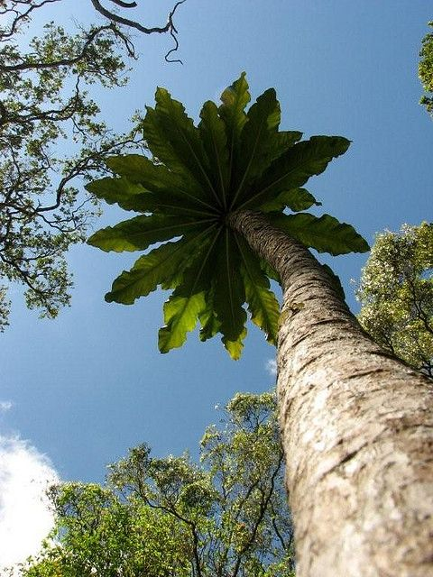 Hawaii And Texas Celebrate Arbor Day In November Tropical